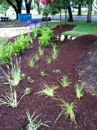 Rain Garden at the Ruiz Branch
