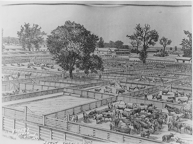 Drawing of Livestock Pens, 1880