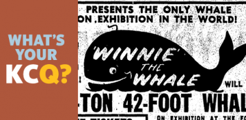 Winnie the Whale advertisement
