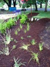 Rain Garden at the Ruiz Branch
