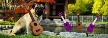 There's a pug playing a ukulele in this picture. You're missing out.