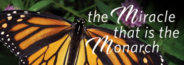 They're among nature's most delicate creatures, but Monarch butterflies are marvels of endurance. Their annual passage between Canada and Mexico – with Kansas City in the middle of the 2,500-mile flyway – is the greatest of all seasonal migrations, with those on the return trip four generations removed from the millions that began the cycle.